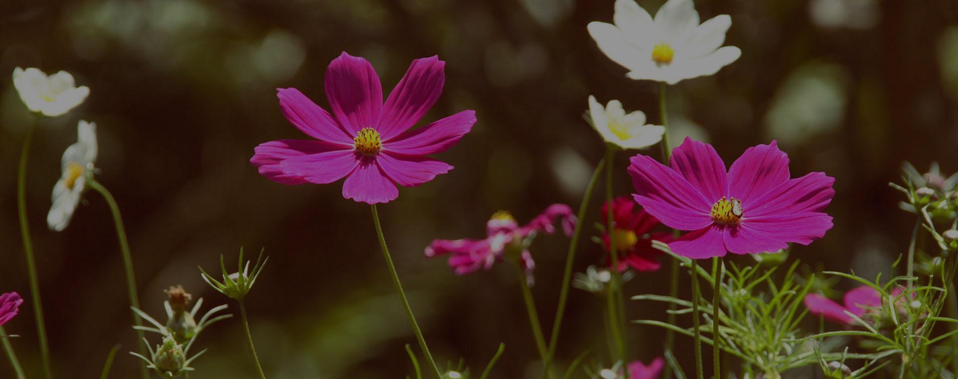 esesencias florales en valladolid